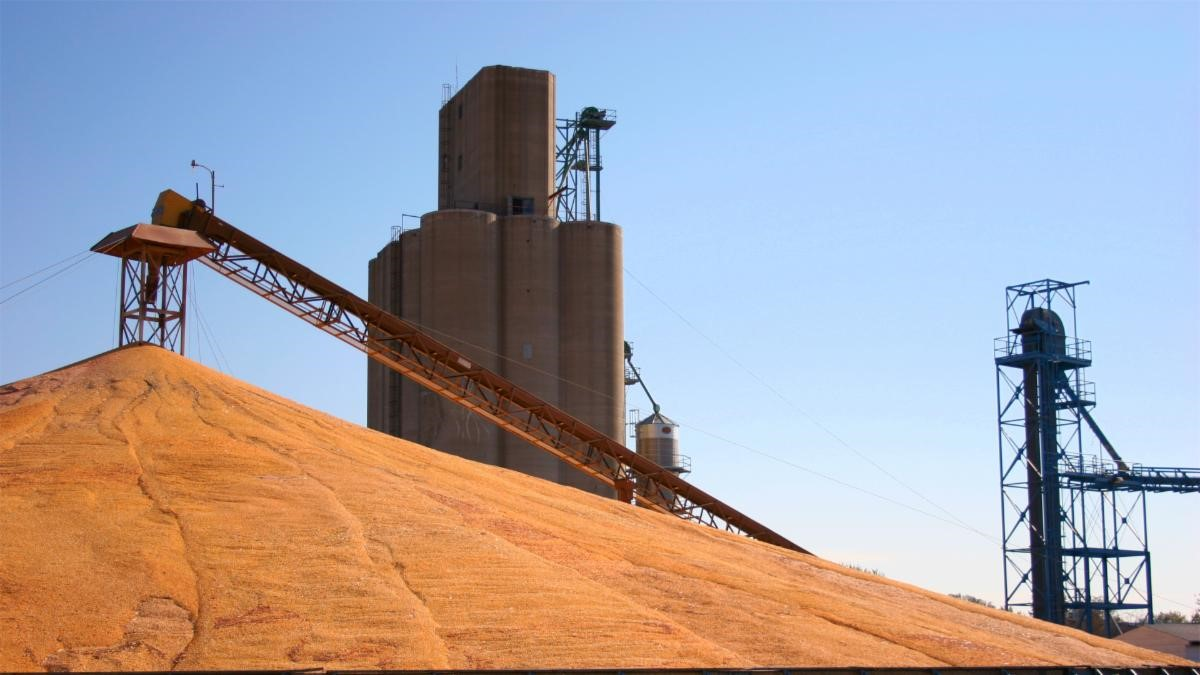 Concrete grain elevator and ground pile of grain